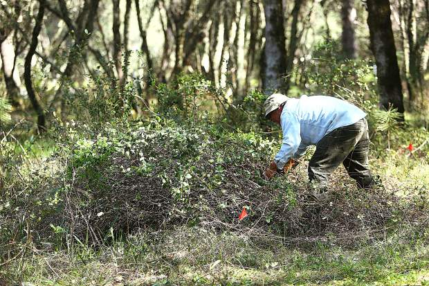 Roughly 30 volunteers worked to clear vegetation from the bike trail designated for Western Gateway Park in Penn Valley before professional bike trail developers will move mounds of dirt into place.
