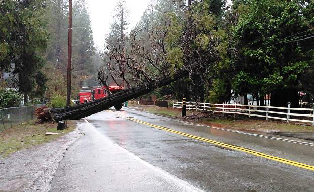 Reader Elizabeth Fjeldheim took this photo of a downed tree that closed Greenhorn Road for most of the day Wednesday.