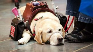 Casey's Corner: Therapy dog, service dog, or none of the above?