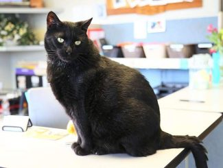 PET OF THE WEEK: T'challa