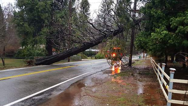 A fallen tree caused a road closure March 6 at around 7 a.m.