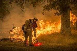 Clearing forests: No simple solution to California wildfires