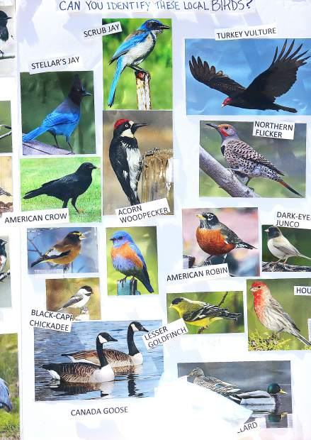 A interactive display by the Audubon Society asks users to pair the birds' image with its correct name.
