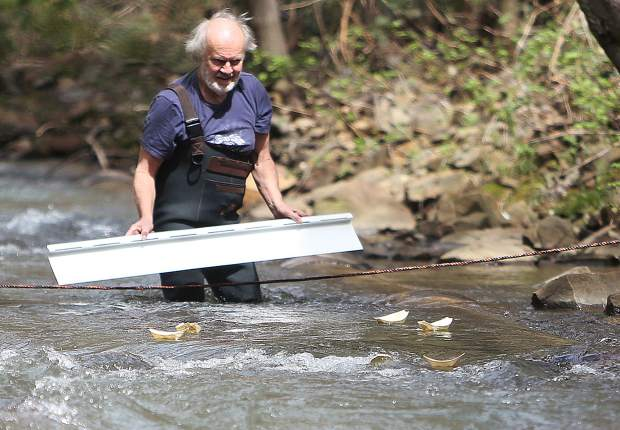 Grass Valley's Dale Peterson launches the official paper boats during the Wolf Creek Alliance boat races Sunday April 7.