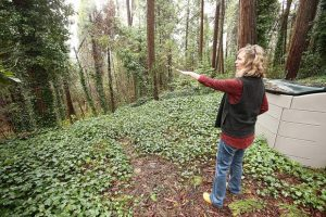 Grass Valley neighborhood searching for safety (PHOTO GALLERY)