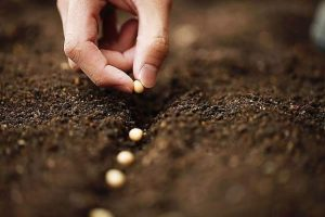JoAnne Skelly: Tips about seeds
