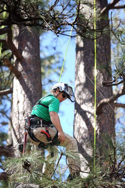 Leaf It To Me Inc. tree climber Skyler Lujan takes a break in the boughs of a tree on the Nevada County Fairgrounds as he puts on a demonstration for the tree service company during Saturday's Home and Garden Show.