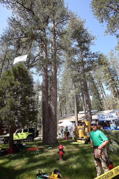 Skyler Lujan readies to climb the large pine tree behind him as he demo's his skills working for Leaf It To Me Inc.