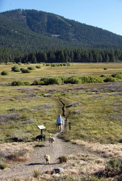 FILE - A woman walks with her dogs in the scenic Martis Creek Wildlife Area in Martis Valley, Calif. California endured its worst ever year for wildfires in 2018, with 1.8 million acres burned and more than 100 wildfire deaths. But that's not stopping developers seeking to fit more people into high fire risk areas near one of the state's most iconic destinations.