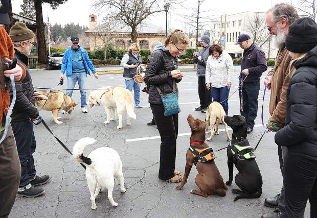 Dogs wait patiently for their pasty treats specially prepared with dog food filling following the end of Grass Valley's Cornish Pasty Olympics held in celebration of St. Pirans Day March 9.
