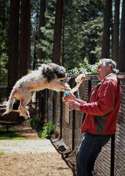 A man and his best friend's leap of faith at Dogs run Free Condon Park.