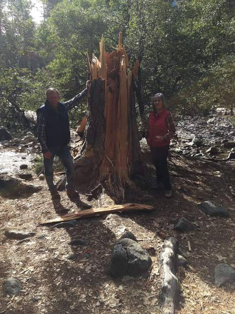 Local residents examining wind damage in Yosemite Valley.