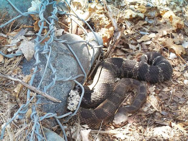 Please be aware of your surroundings during rattlesnake season.  Taken at the Deer Creek Tribute Trail.