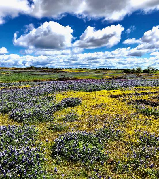 Eight Grass Valley hikers went to Table Mountain ecological reserve - a basalt plateau/Mesa outside of Oroville - famous for its spring time flower displays on April 16.