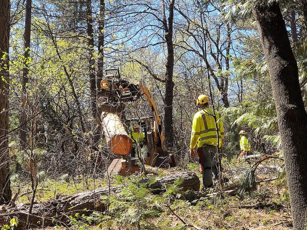 Major tree/logging work being done at Condon Park behind the disc golf area.