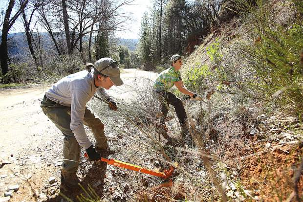Dan Lubin and Cazen Ostrander work to clear the invasive and fire prone Scotch broom plant from a hill along Purdon Road during Saturday's Scotch Broom Challenge.
