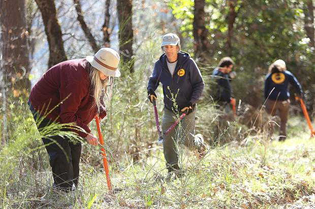 Grass Valley's Lisa Haden uses an Extractigator weed pulling tool while State Parks Environmental Scientist Dan Lubin comes to assist with the pulling of a Scotch broom weed near Purdon Crossing during Saturday's Scotch Broom Challenge hosted by the South Yuba River Citizen's League and California State Parks.