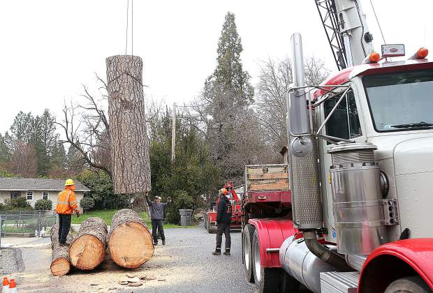 Flying Squirrel Tree Care contracted with a crane company that traveled from Sparks, Nevada to help remove the large tree last week.