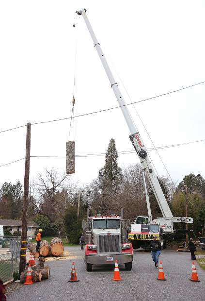 A large crane that came in from Sparks, Nevada, moves the large pieces of cut tree where they can be placed on the back of a flatbed truck Friday near Condon Park.