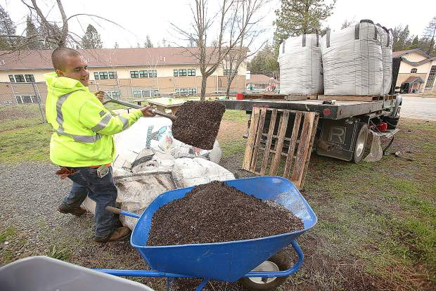 Hawthorne Garden Company's Neil Carranza fills wheelbarrows full of Vermicrop Organic's vermisoil Tuesday from the back of a truck.