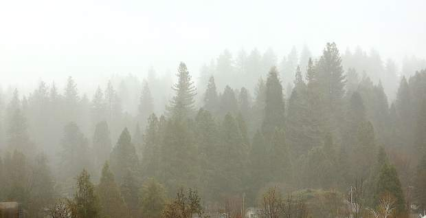 Rain showers shroud the forest surrounding Grass Valley in a mist Tuesday afternoon.