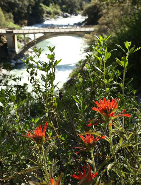 Indian Paintbrush is just one of the many wildflowers blooming along the trails of the South Yuba River State Park.