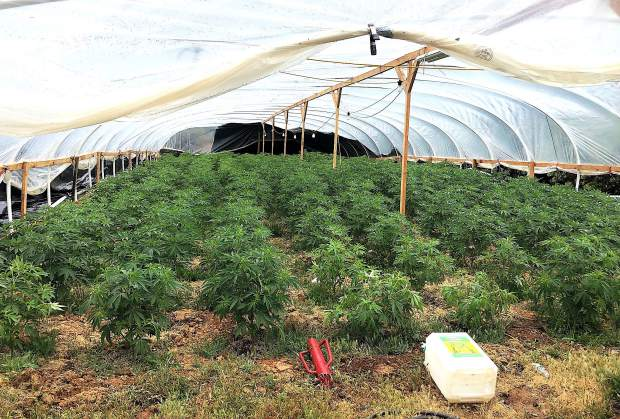 A large marijuana grow was targeted by Yuba County Sheriff's deputies in Dobbins.