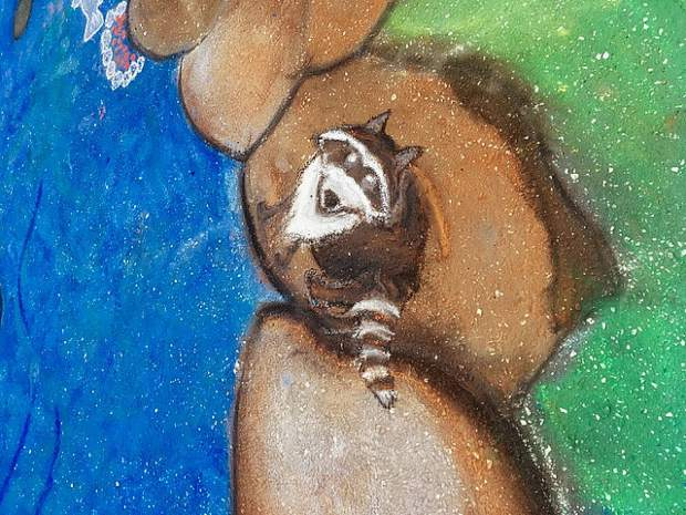 A detail of the chalk mural shows various animals native to the Wolf Creek watershed, including this raccoon.