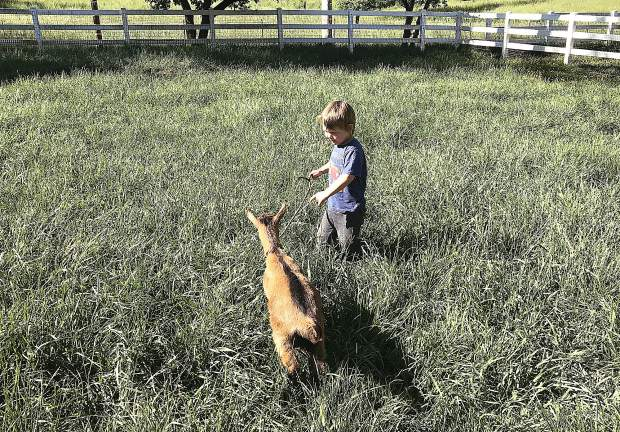 From the babies, you move on to feed the bigger kids (goat kids, that is) and then join them in the big pasture where they frolic and play.