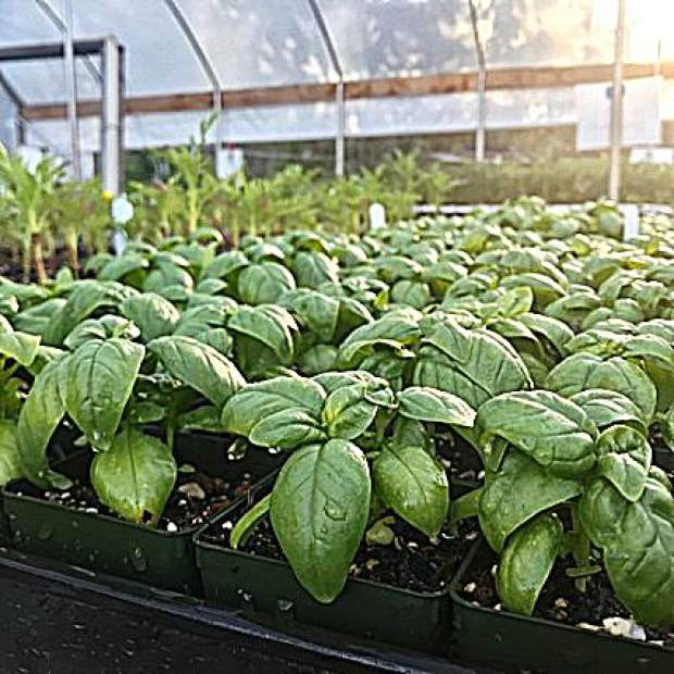 Local growers have been tending seedlings with care all winter, and you swoop in and benefit from all their hard work.