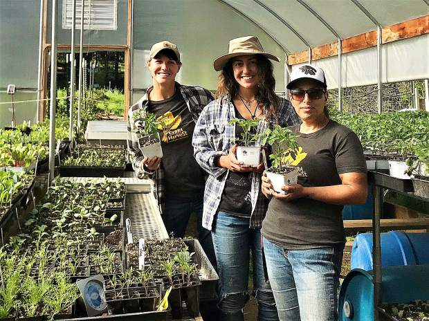 Sierra Harvest's  Food Love Farm will be selling organic veggies, herbs and more9 a.m.-1 p.m. Saturdays, May 11 and May 18.