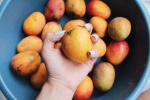 Alan Tangren: Mangos on the market?