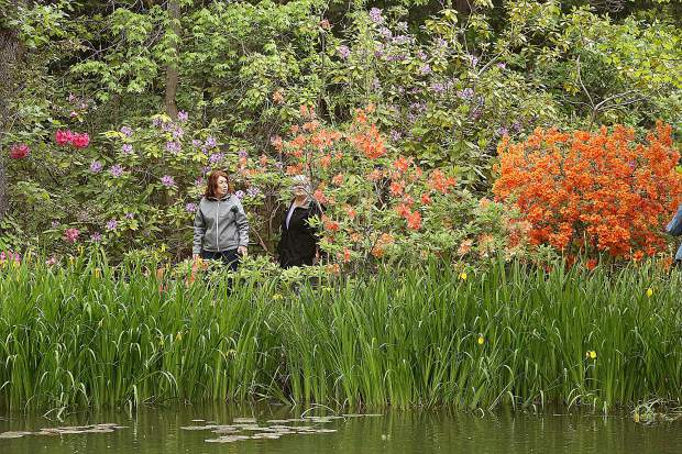 Susie Wisnia and Debra Pohlson enjoy a walk through the flowering rhododendrons around the Ruland pond Saturday during the garden tour.