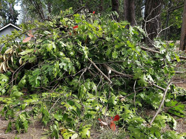 The green waste disposal project can't accept anything over 6 inches in diameter or household garbage.