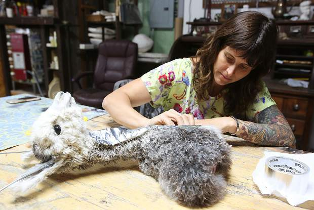Taxidermy artist Hollie Dilley works on a new piece from her Nevada City artist studio at the Nail Factory off of North Bloomfield Road.
