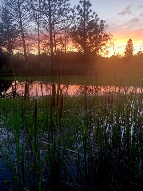 Sunset at a pond in Rough and Ready, May 19.