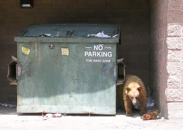 About 95 percent of the issues NDOW has with nuisance bears are directly linked to trash and trash management.