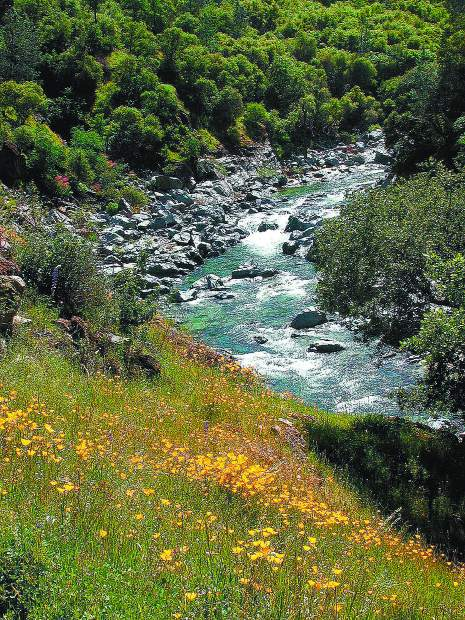 The South Yuba River roars with recent snow melt for hikers visiting the wildflowers along the Buttermilk Bend Trail near Bridgeport.