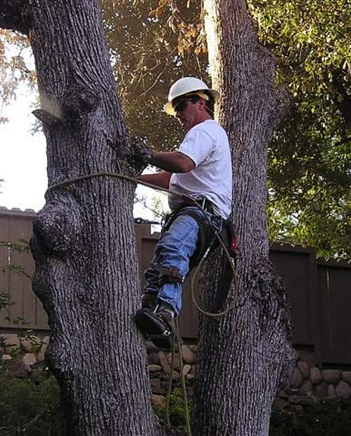 Certified Arborist Tim Murphy of Nevada City, aka Tim the Tree Man, is now famous in the Big Apple and readers of the New York Times.