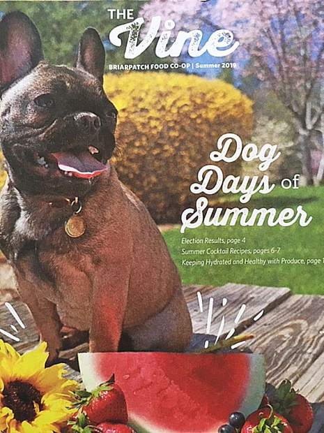 "The ""Dog Days of Summer"" is the theme of BriarPatch Food Co-op's summer quarterly newsletter, ""The Vine."""