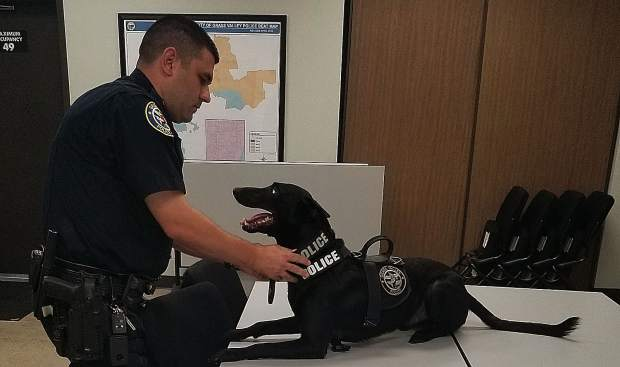 Grass Valley Police Officer Evan Butler's K9 cop partner is Kano, a Malinois that has become increasingly more popular since the release of a movie featuring a pair of Malinois dogs using Dog Fu to take down bad guys.