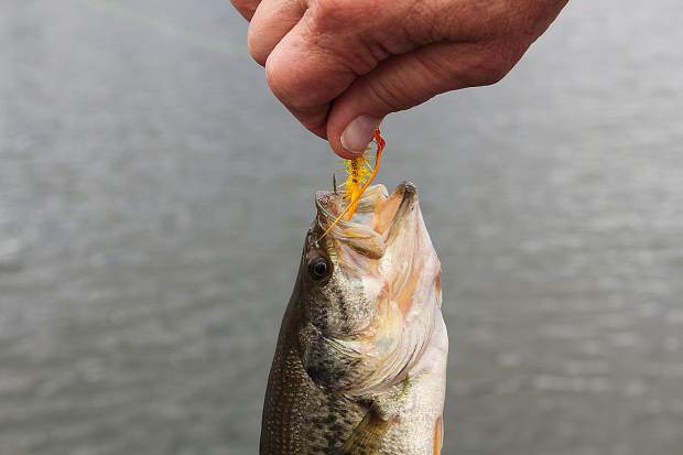 A small bass on a yellow streamer fly was the lone fish landed on this trip.