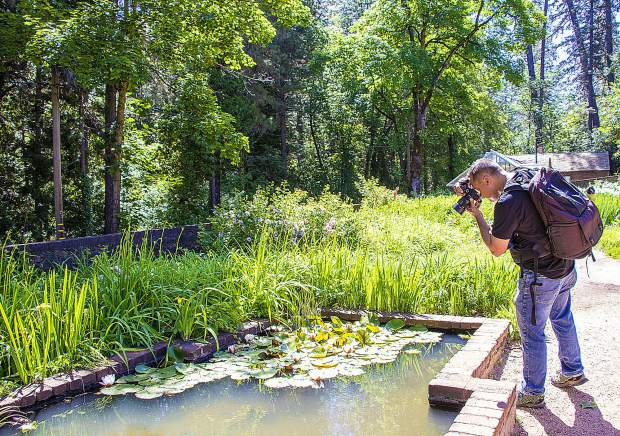 Kial James photoing white lotus blooms in the small reflecting pool. Kial James hosts a wonderful and fun photo walk June 1 at Empire Mine.