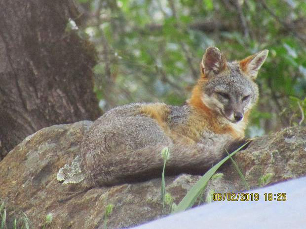 This boy has taken up residence outside our Alta Sierra home.