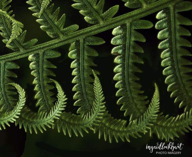 Conversation with a Fern, is stunning in its elegant simplicity, an award-winning illustration of minimalism. It reminds of us of how photography can capture the exquisite beauty in the ordinary.