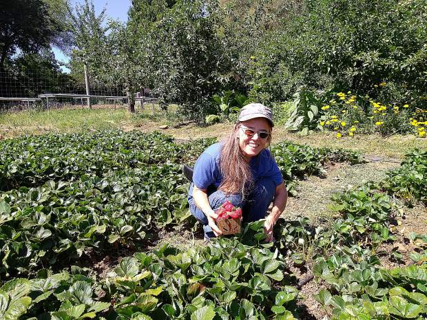 Evelyn Soltera, owner of  All About Wells, picks strawberries at Riverhill Farm. Riverhill Farmstand is open every Wednesday, 2-6 p.m. They also sell wholesale and at the Saturday Market in downtown Nevada City.