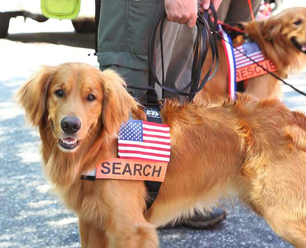 A Nevada County search and rescue golden retriever named Groot smiles as he readies to take part in the Fourth July parade Thursday in downtown Grass Valley.