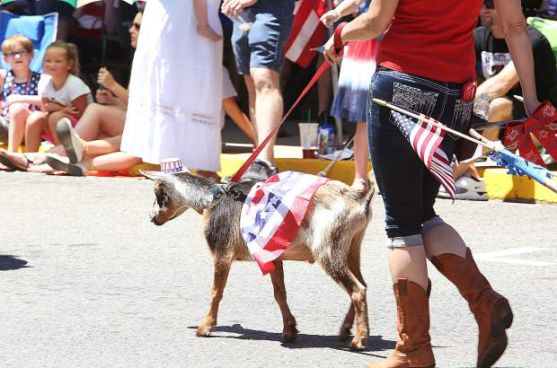 A Fourth of July goat walks the parade.