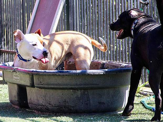 Rocky and Goose, Sammie's Friends animals, cooling off in the heat.
