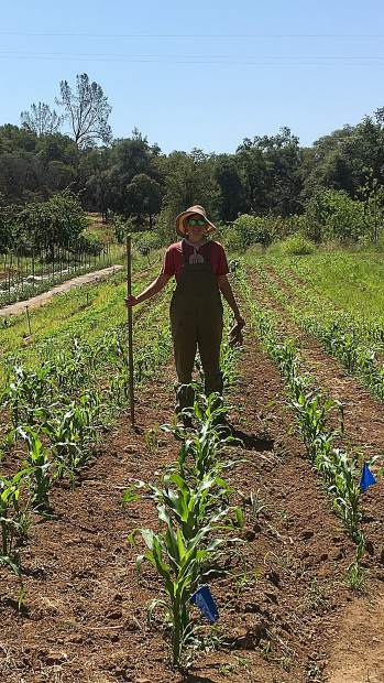 The corn at Indian Springs Organic Farm was knee high by the 4th of July.